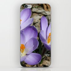 Garden Flowers iPhone & iPod Skin