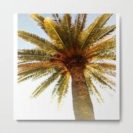 Sunny palm tree Metal Print