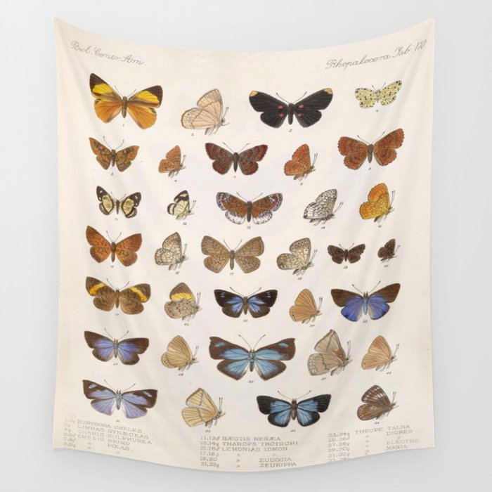 Vintage Scientific Insect Butterfly Moth Biological Hand Drawn Species Art Illustration Wandbehang