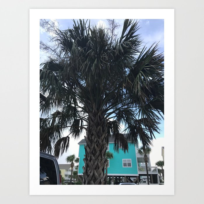 Palm Trees In Myrtle Beach Art Print