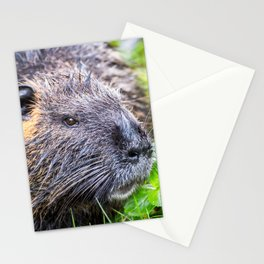 Nutria Myocastor Coypus animal close-up in wild nature in french swamps Stationery Cards