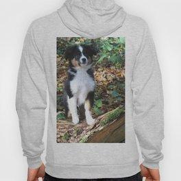 Australian Shepherd Puppy Hoody