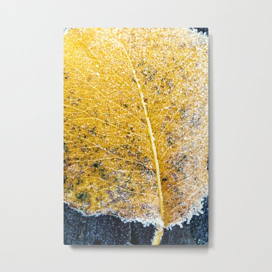 yellow and frosted Metal Print