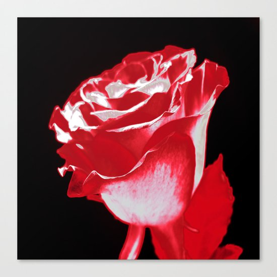 Colorful Rose P Canvas Print