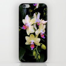 Yellow Orchids iPhone & iPod Skin
