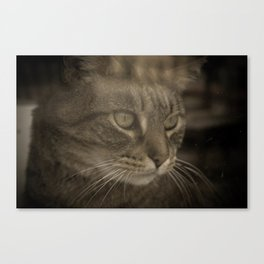 All Animals must be Caged! Canvas Print