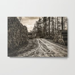 Poltery Site (Wood Storage Area) After Storm Victoria Möhne Forest 5 sepia Metal Print