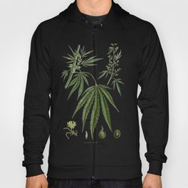 Cannabis Ativa Hoody