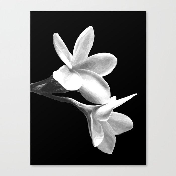 White Flowers Black Background Leinwanddruck