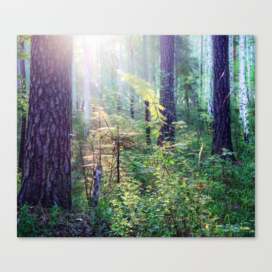 Sunny morning in the forest Canvas Print
