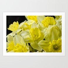 Simply Daffodils Art Print