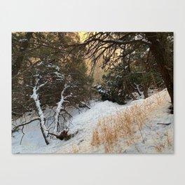 Carson Forest  Canvas Print