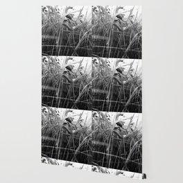 harvest Wallpaper