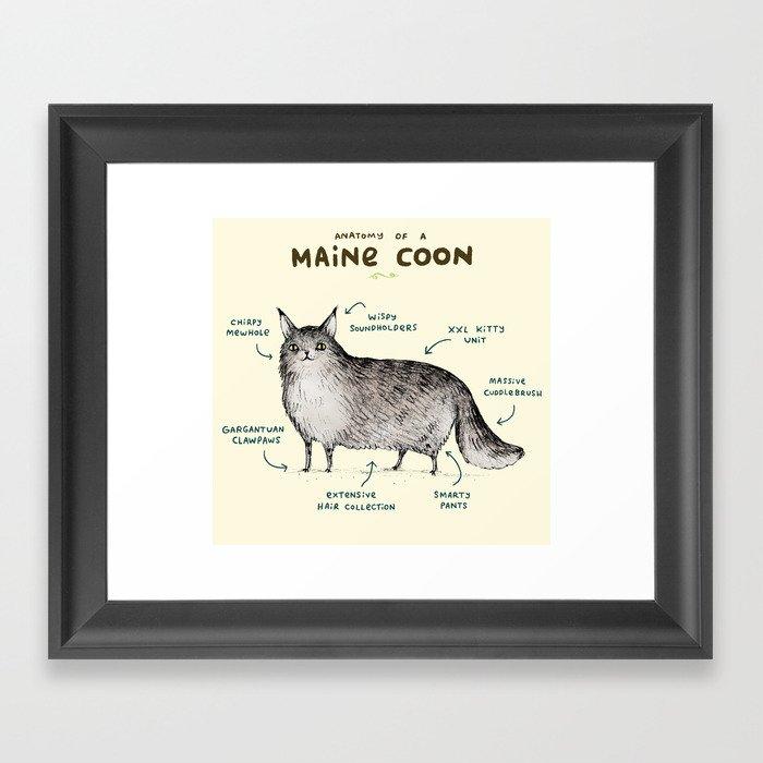Anatomy of a Maine Coon Gerahmter Kunstdruck