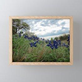 Blue Bonnet Madness Framed Mini Art Print