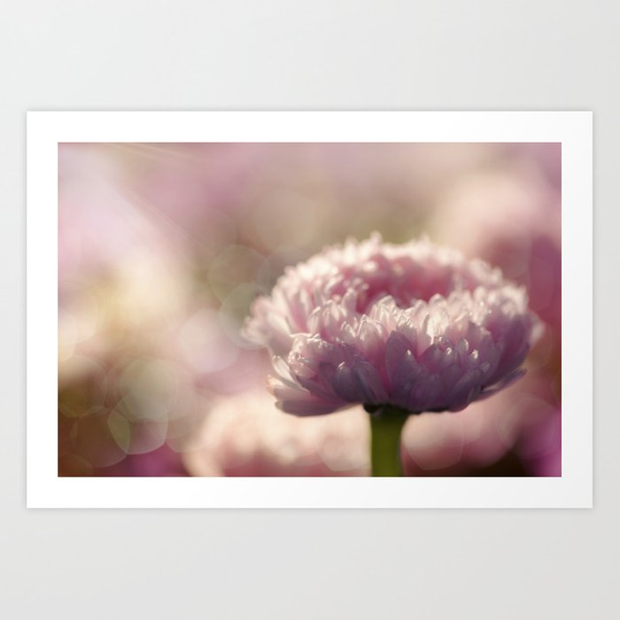 Daisy Flower Floral in Love Art Print
