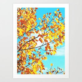 Brilliance of Sun and Color Art Print