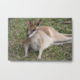 Wallaby Metal Print