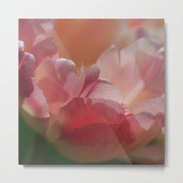 Tender Tulip Petals Metal Print