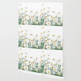 white margaret daisy horizontal watercolor painting Wallpaper