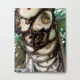 Prickly Palm Metal Print