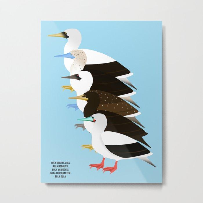 Booby Birds Metal Print
