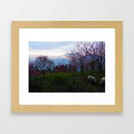 Sheep and Sunsets Framed Art Print