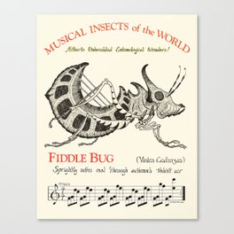 Musical Insects of the World  FIDDLE BUG Canvas Print