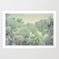 Spring white flowers Art Print
