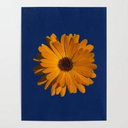Orange power flower Poster