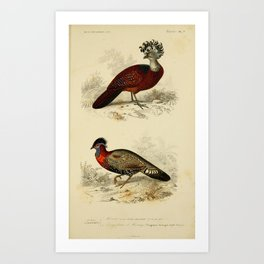 D'Orbigny - Universal Dictionary of Natural History; Birds (1849): 7 Great Curassow; Tragopan Art Print