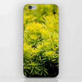 Taxus baccata Yew new shoots iPhone Skin