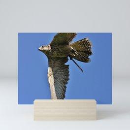 Falcon Soaring Before Blue Sky Mini Art Print