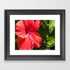 hibiscus flower Framed Art Print