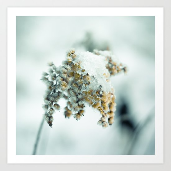 Frost & beauty Art Print