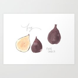 Fig Watercolor Illustration Art Print