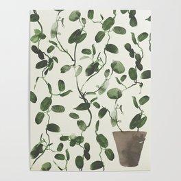 Hoya Carnosa / Porcelainflower Poster
