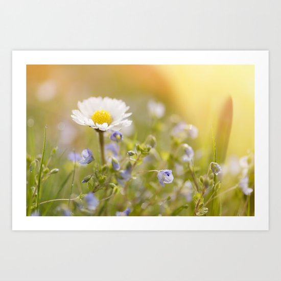 Daisy and court- Daisies Flowers Flower Meadow Spring #Society6 Art Print