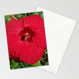 Hibiscus 'Fireball' - regal red star of my late summer garden Stationery Cards