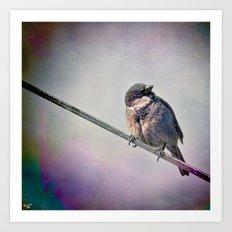 A New York City Sparrow Art Print