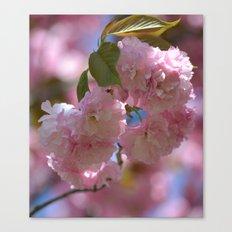 Sweet Spring Canvas Print