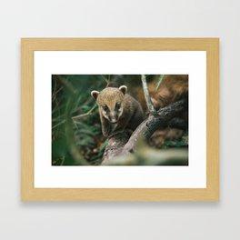 LONG-NOSE PUPPER 10/10 Framed Art Print