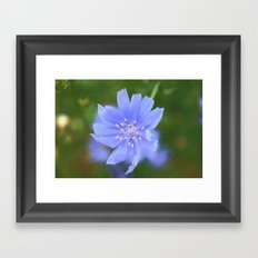 cornflower blue Framed Art Print