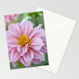 Dahlia Suffusion Stationery Cards