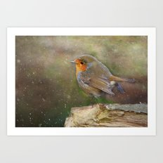 Robin red breast Art Print