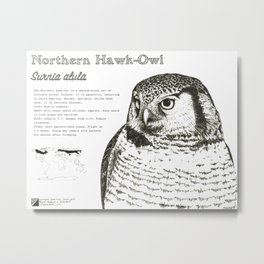 Northern Hawk-Owl: Infographic Poster Metal Print