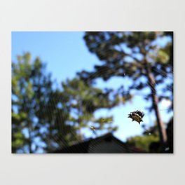 A spider and its web Canvas Print