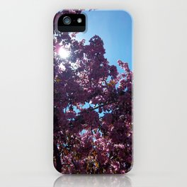 Sweet Creations iPhone Case