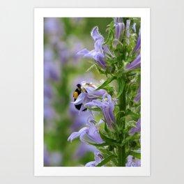 busy bee in purple flower Art Print
