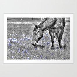 Horse & Bluebonnets Art Print